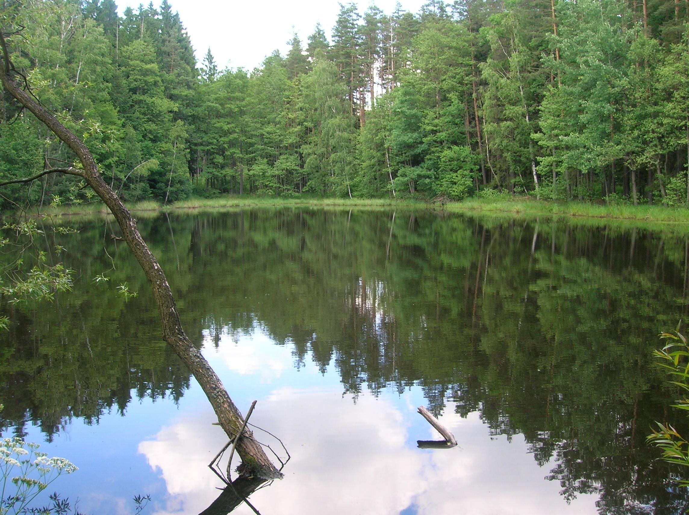 Turovecký les